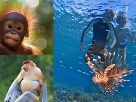 Borneo - kráľovstvo zvierat