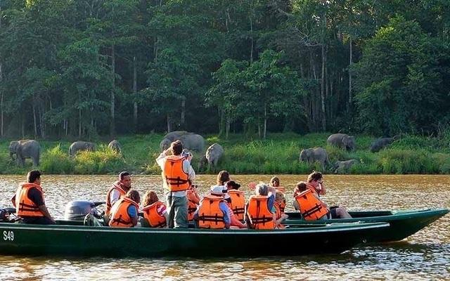 Pygmy slony v Sukau
