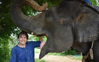 Elephant home